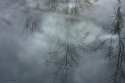 reflecting trees with fog copy